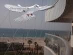 רשת שקופה חזקה ועבה ביותר למניעת כניסה של ציפורים יונים עטלפים  עם חורים בגודל 4 ס''מ עובי חוט  0.40